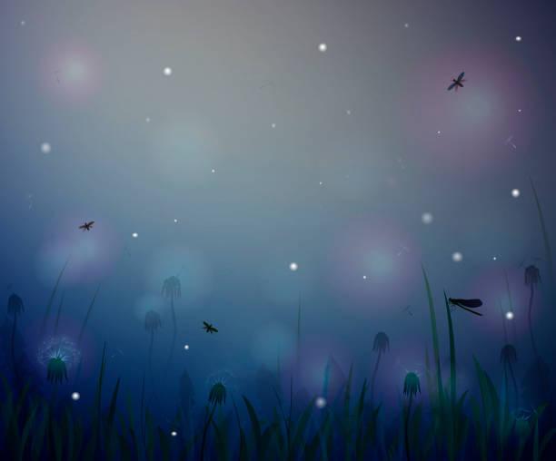 summer night,  night summer field life, fireflight,  vector summer night,  night summer field life, fireflight,  vector flowerbed stock illustrations