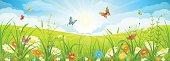 Summer or spring landscape