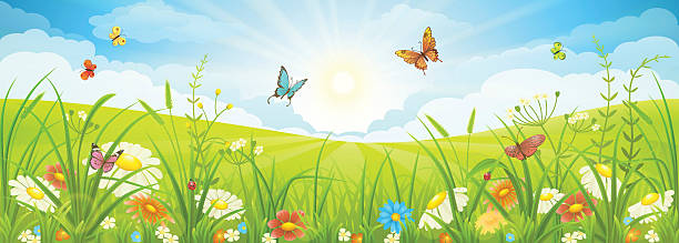 Summer or spring landscape Floral summer or spring landscape, meadow with flowers, blue sky and butterflies butterfly insect stock illustrations