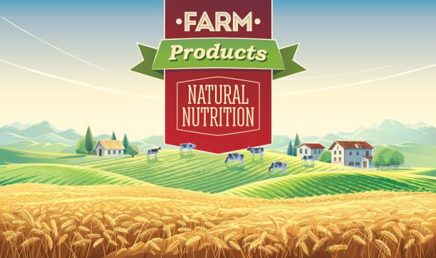 여름 농촌 풍경과 디자인 요소 - 유가공 식품 stock illustrations