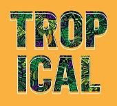 Summer text - Tropical
