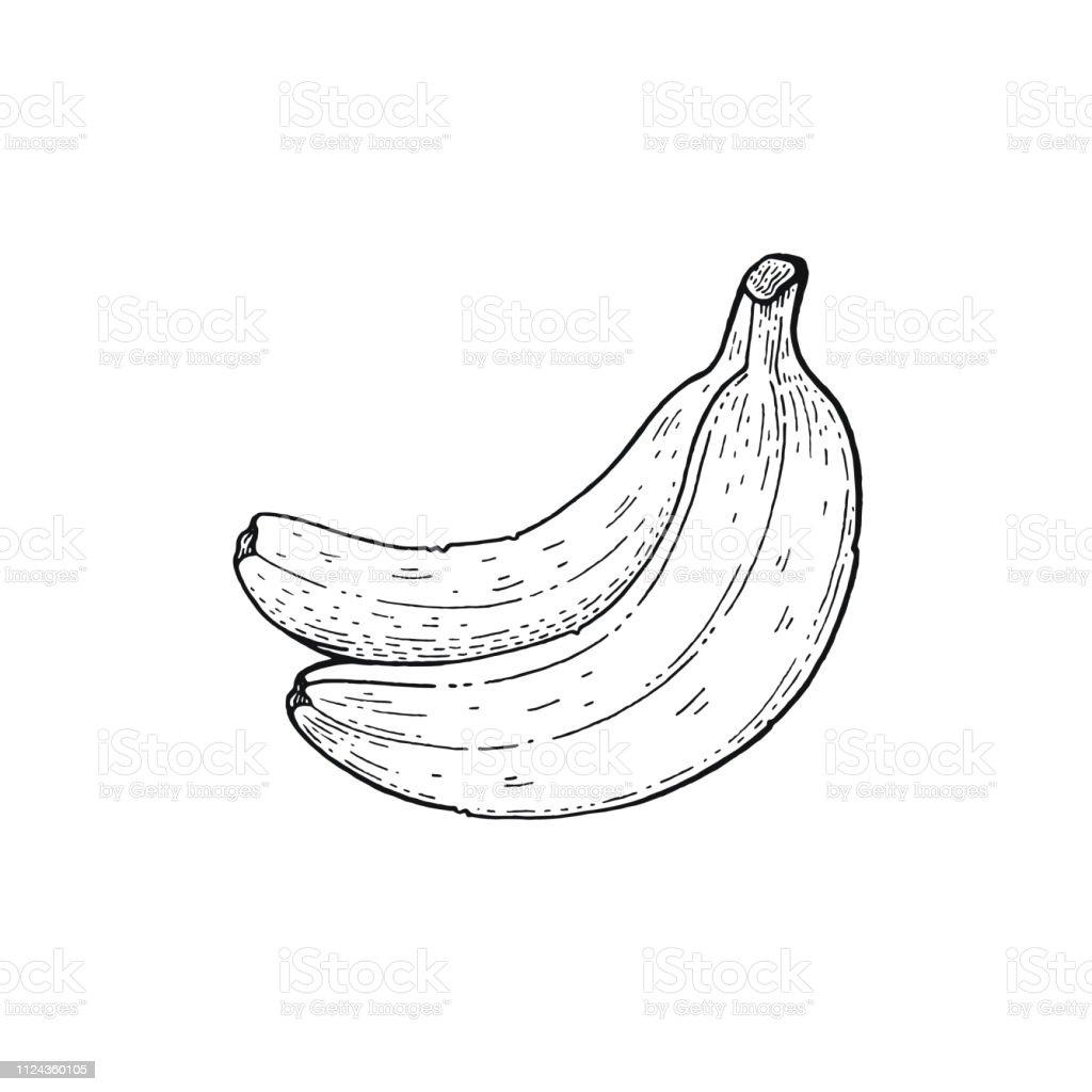 Ilustración De Verano Tropical Plátano Fruta Comida Exótica