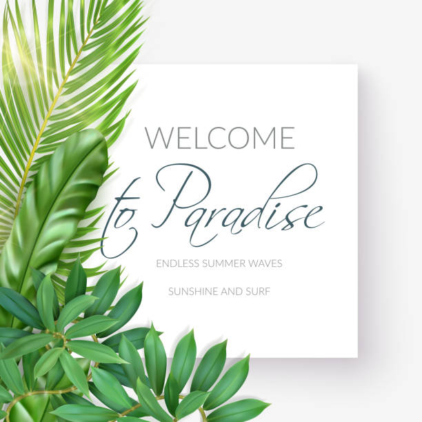 Summer tropical background with exotic palm leaves White banner with photo realistic palm leaves and handwriting text Welcome to paradise, Endless summer waves, sunshine and surf on a light background. Poster for promotions, magazines, advertising. banana borders stock illustrations