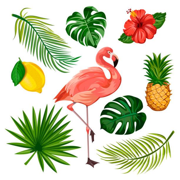 Summer tropical design elements set, isolated. Vector cartoon illustration of flamingo, palm leaves, pineapple, flowers Summer tropical design elements set, isolated on white background. Vector cartoon illustration of flamingo, palm leaves, pineapple, lemon and exotic flowers. flamingo stock illustrations