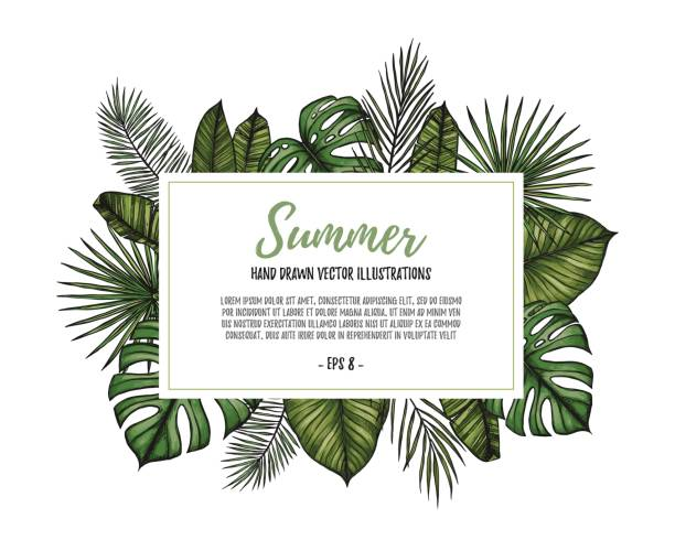 summer tropical exotic template. label with palm leaves (monstera, areca palm, fan palm, banana leaves). hand drawn vector illustration. perfect for prints, posters, invitations, packing etc - palm leaf stock illustrations, clip art, cartoons, & icons