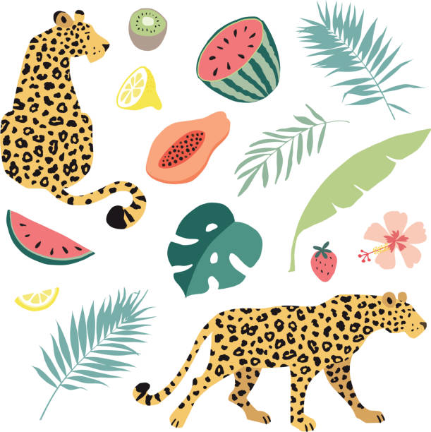 Summer tropical graphic elements. Leopard cats animals. Jungle floral illustrations, palm, monstera leaves and hibiscus flower. Watermelon, papaya, kiwi and lemon fruit. Isolated vectors, flat design. Summer tropical graphic elements. Leopard cats animals. Jungle floral illustrations, palm, monstera leaves and hibiscus flower. Watermelon, papaya, kiwi and lemon fruit. Isolated vectors, flat design. jaguar stock illustrations