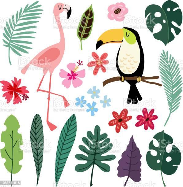 Summer tropical graphic elements toucan and flamingo birds jungle vector id935711818?b=1&k=6&m=935711818&s=612x612&h=igg4faafale43fpvfok mtqt0gcp3kyn2jnpzaksimc=