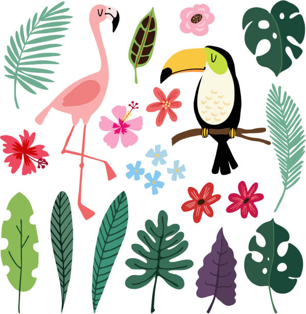 summer tropical graphic elements. toucan and flamingo birds. jungle floral illustrations, palm, monstera leaves, hibiscus flowers. isolated illustrations, kids flat design, vectors. exotic nature - jungle stock illustrations