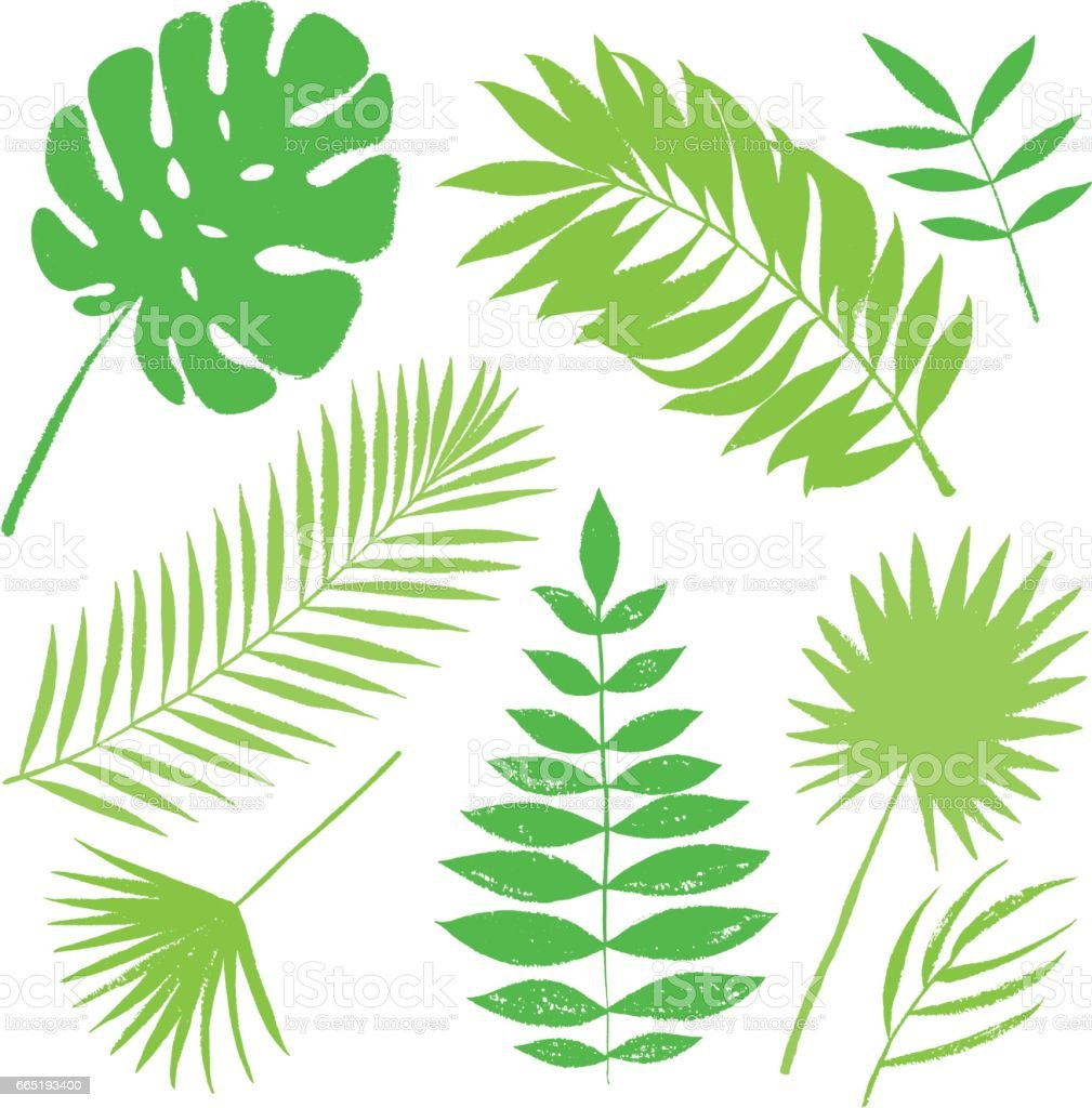 Summer tropical green palm tree leaves elements. Vector grunge design for cards, web, backgrounds and natural product. vector art illustration