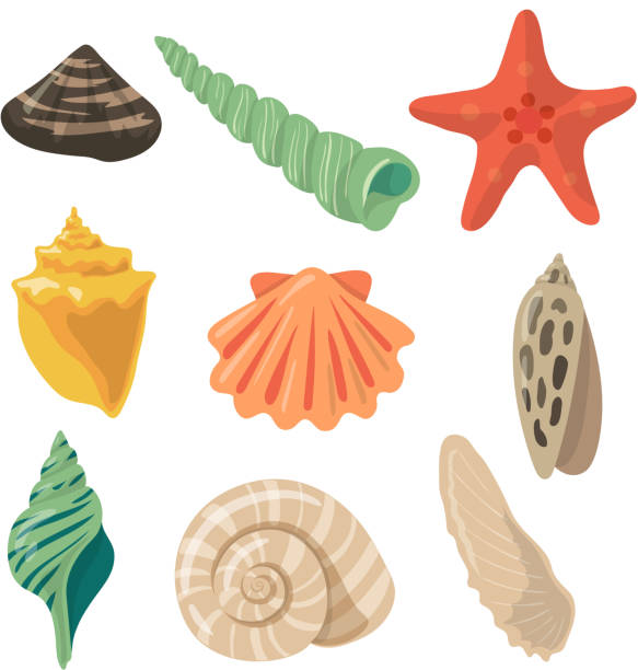 summer tropical objects. marine shells in cartoon style. vector pictures set - seashell stock illustrations, clip art, cartoons, & icons