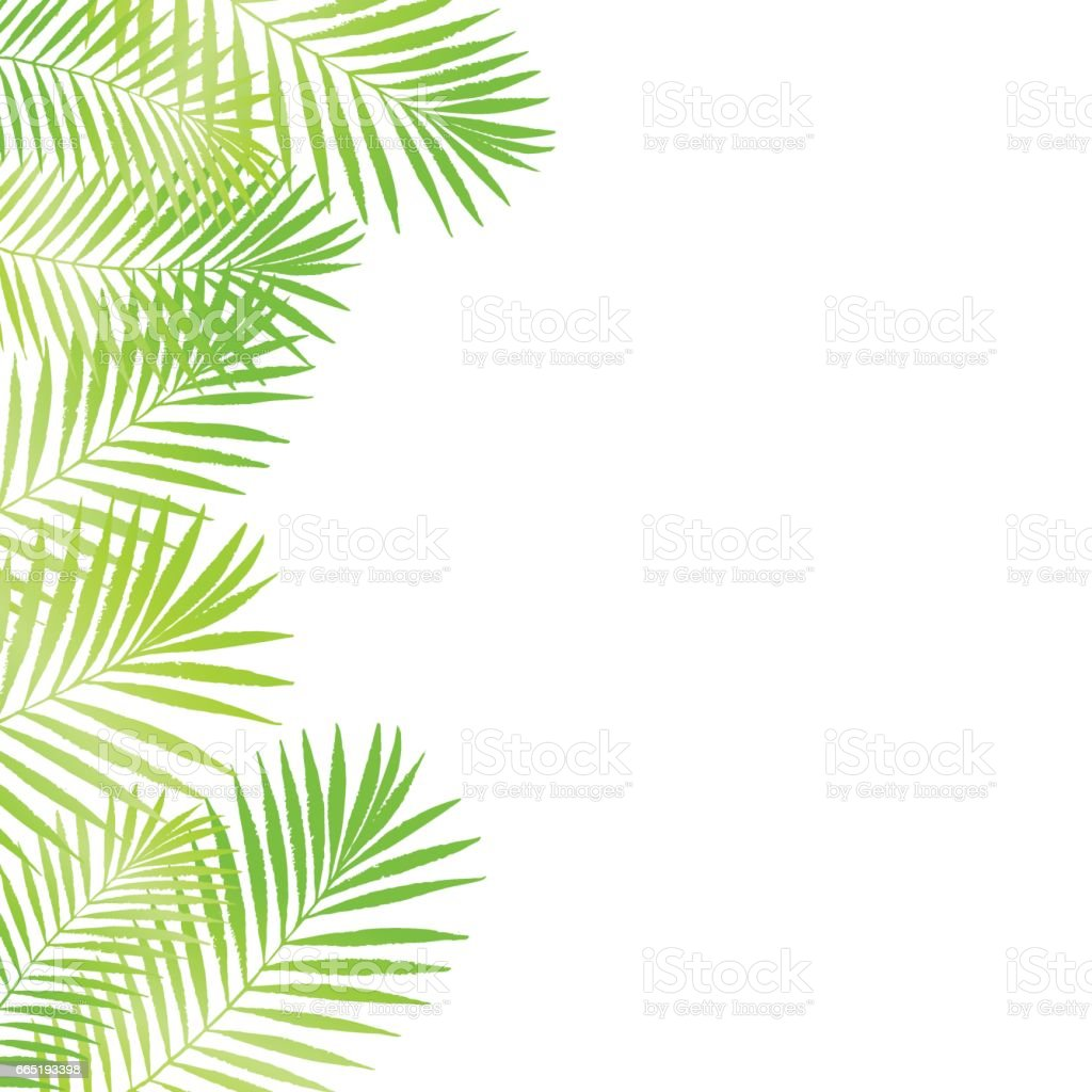 plant anatomy word search with Summer Tropical Palm Tree Leaves Border Frame Background Vector Grunge Design For Gm665193398 121282575 on 345605 Monoprinting as well Summer Tropical Palm Tree Leaves Border Frame Background Vector Grunge Design For Gm665193398 121282575 moreover Plant Reproduction Worksheet as well Rice Panicle likewise 2.
