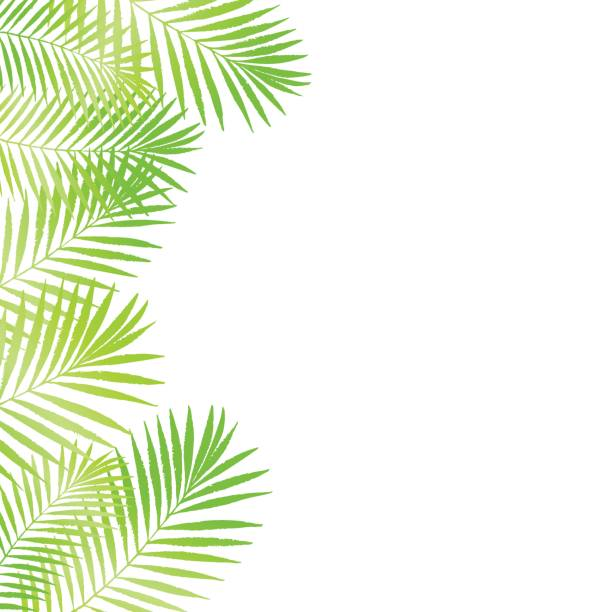 Cartoon Of A Banana Leaf Clip Art Vector Images Illustrations