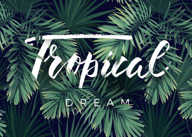ilustrações, clipart, desenhos animados e ícones de projeto de verão tropical vetor para banner ou panfleto com folhas de palmeira verde escuro e letras - textura de folhas