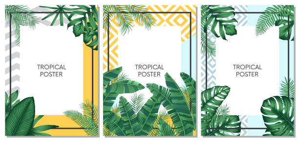 Summer tropical vector set design for cards, poster or flyer with exotic palm leaves Summer tropical vector set design for cards, poster or flyer with exotic palm leaves banana borders stock illustrations
