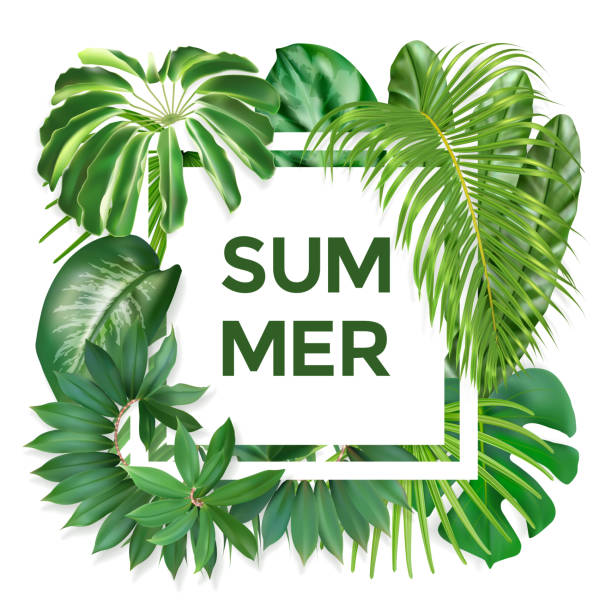 Summer typography with exotic leaves Green summer tropical background with exotic palm leaves and plants. Vector photorealistic exotic palm leaves. Summer banner for cosmetics, textile, print, party invitation, sale design. banana borders stock illustrations