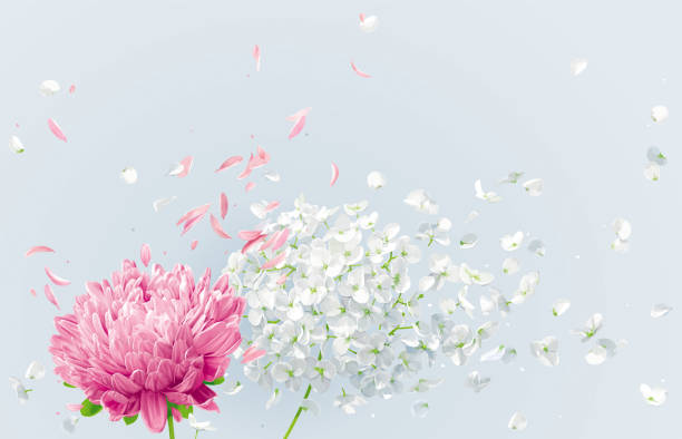 Summer wind vector floral drawing Summer wind - white vector Hydrangea flower, Apple blossom and pink Chrysanthemumwith flying petals in watercolor style for 8 March, wedding decoration, Valentine's Day,  Mother's Day, seasonal sales apple blossom stock illustrations