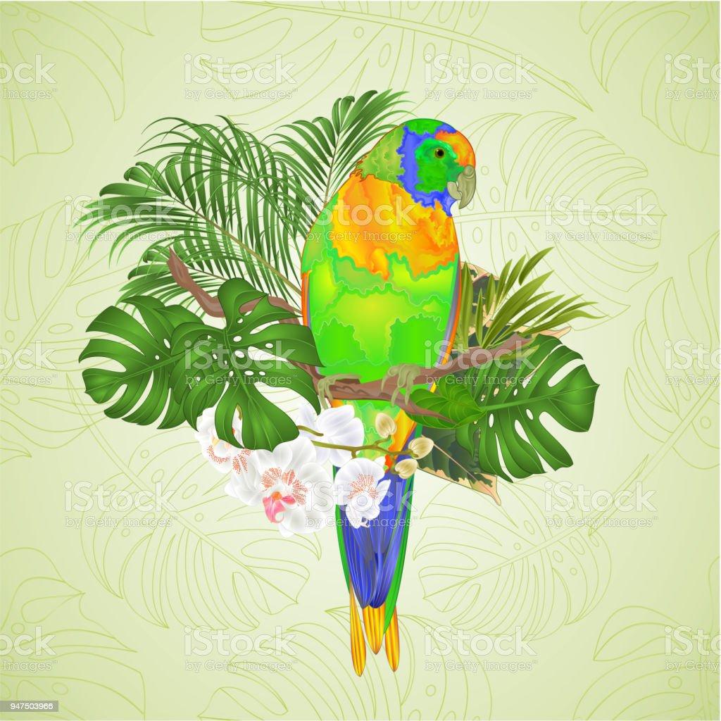 Sun Conure Papagei Tropischer Vogel Stehend Auf Einem Zweig Weiße ...