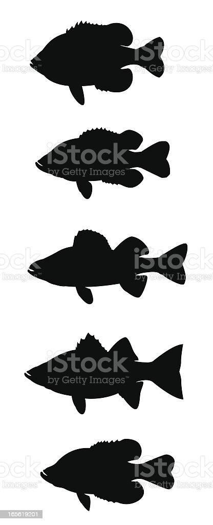 Sun Fish vector art illustration