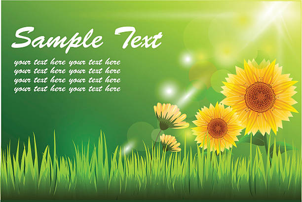 stockillustraties, clipart, cartoons en iconen met sun flower and sunlight with green grass - fresh start yellow