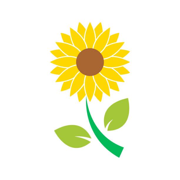 sun flower icon isolated vector - sunflower stock illustrations