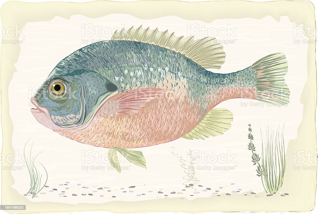 Sunfish royalty-free sunfish stock vector art & more images of animal