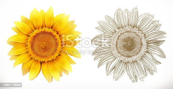 Free download of Sunflower vector graphics and illustrations