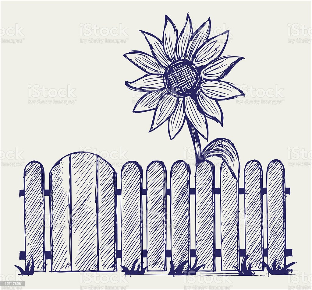 Sunflower and fence royalty-free stock vector art