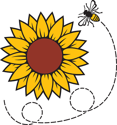 Sunflower and flying Bee