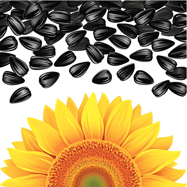 Royalty Free Sunflower Seeds Clip Art, Vector Images ...
