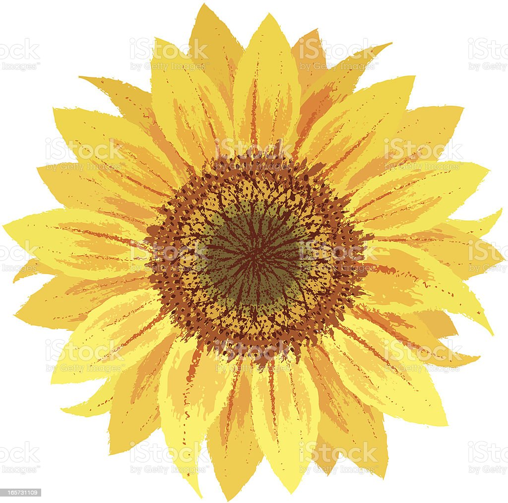 Sunflower by hand-drawn vector art illustration