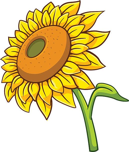 Sunflower Cartoon Style Vector Art Illustration