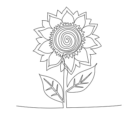 Sunflower drawn one continuous line