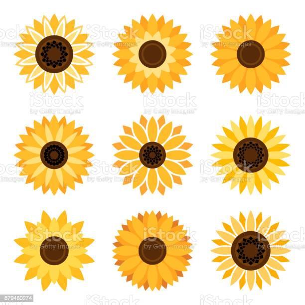 Sunflower emblem set vector id879460274?b=1&k=6&m=879460274&s=612x612&h=4r8zt1zwuixinvcpv6 j5gr5lv e2ysruhf1rtfyfvy=