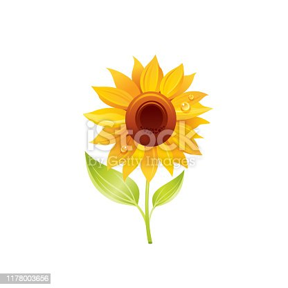 Sunflower flower, floral icon. Realistic cartoon cute plant blossom, spring, summer garden symbol. Vector illustration for greeting card, t shirt print, decoration design. Isolated on white background