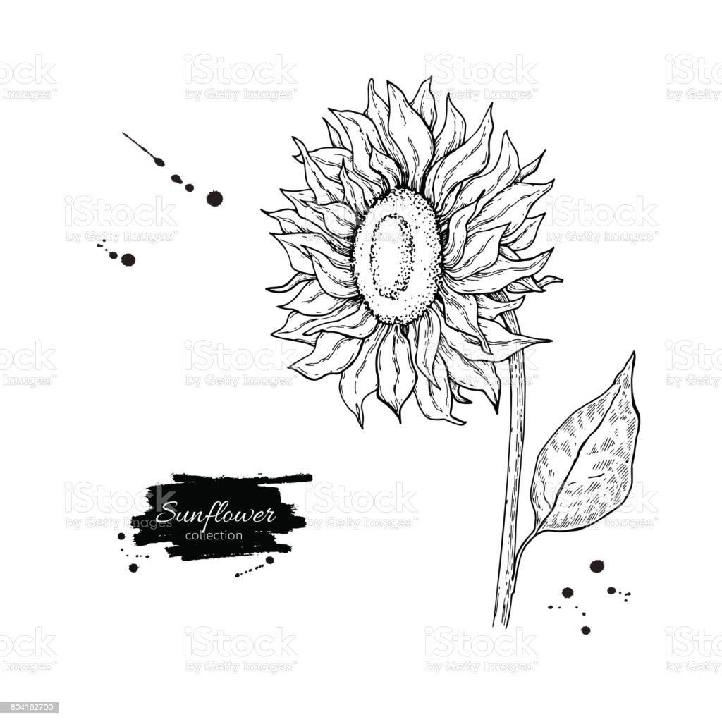 Vetores De Desenho Vetorial De Flor De Girassol Ilustracao De Mao