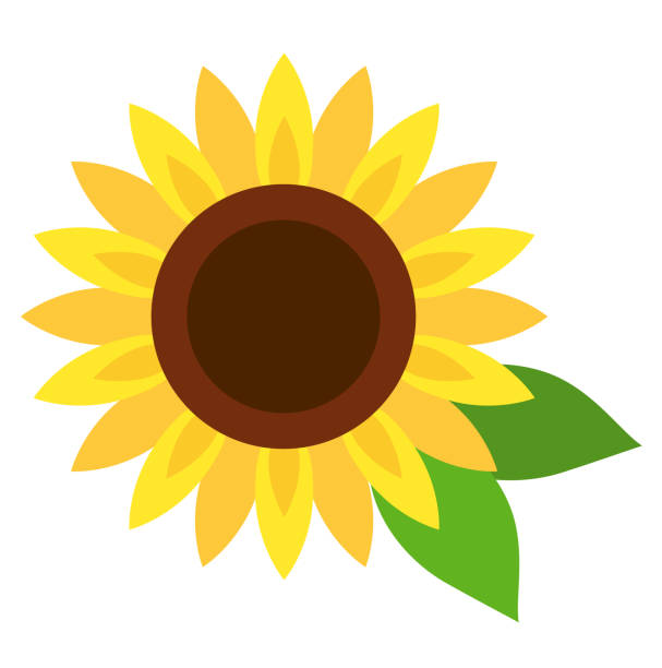 Sunflower icon Sunflower icon temperate flower stock illustrations