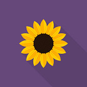 Sunflower icon with long shadow on purple background, flat design style