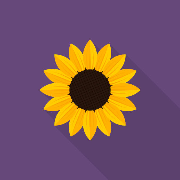 sunflower icon with long shadow on purple background, flat design style - sunflower stock illustrations