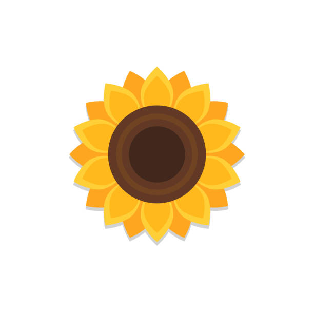 Sunflower icon with shadow vector art illustration