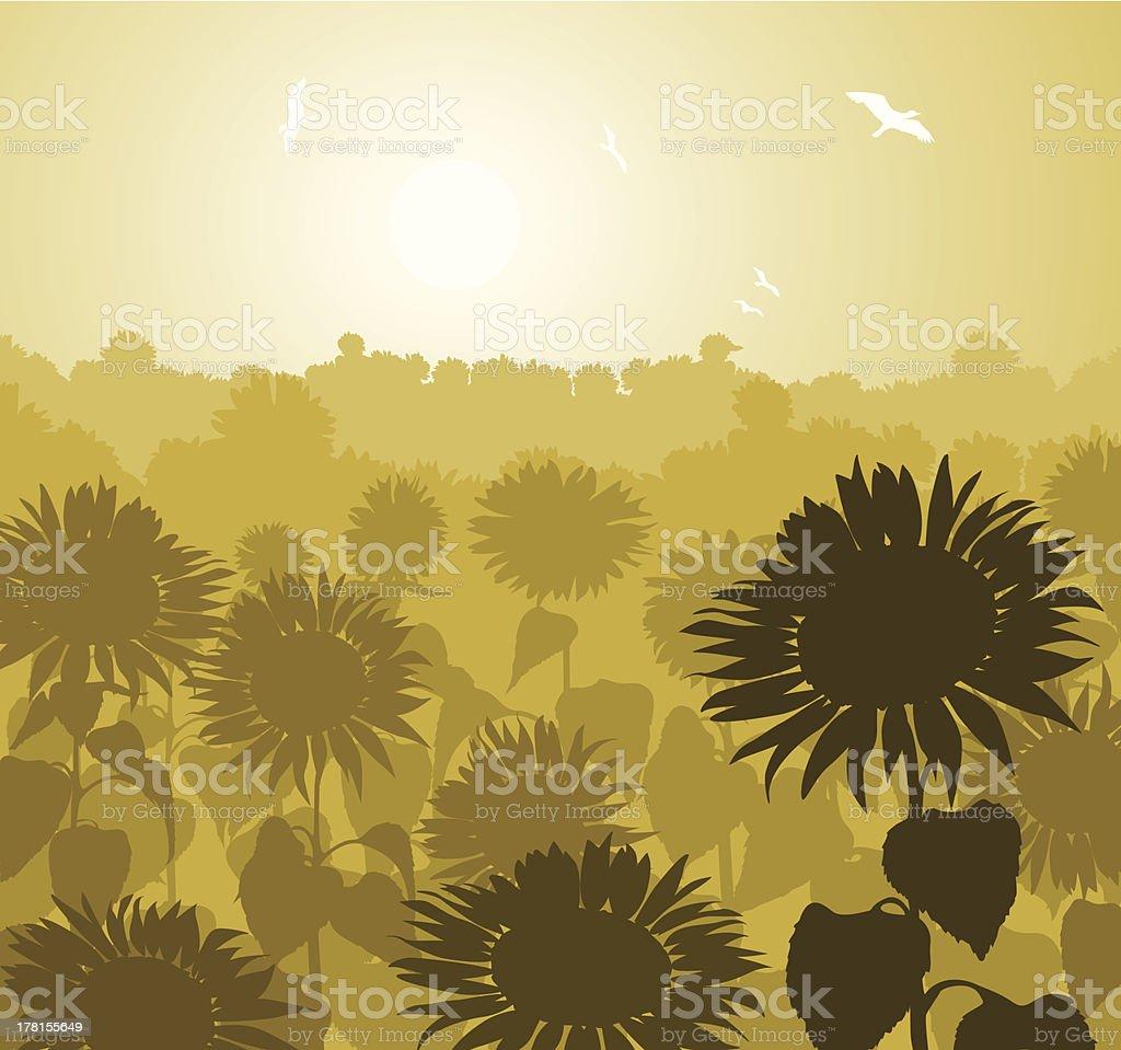 sunflower landscape royalty-free stock vector art