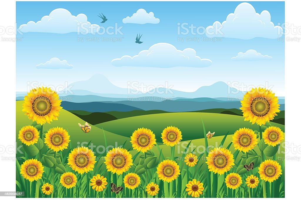 sunflower landscape. royalty-free sunflower landscape stock vector art & more images of cloudscape