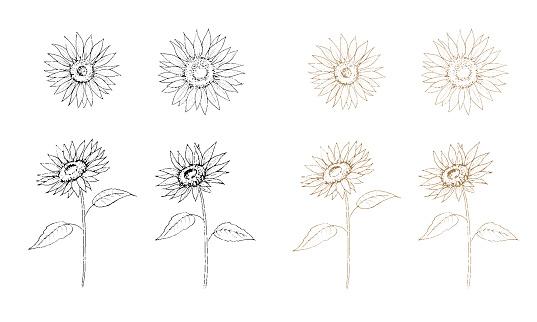 Sunflower line art illustration set.