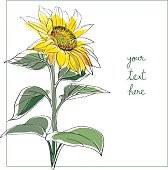Sunflower minimal card
