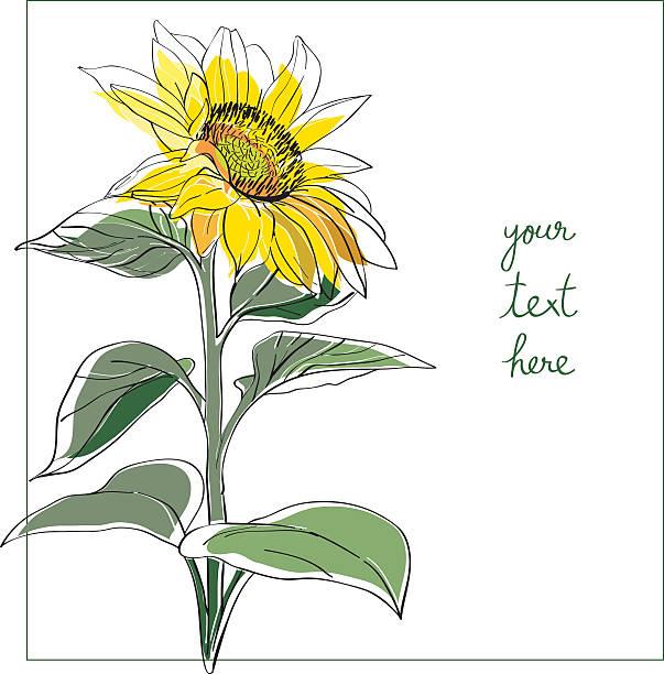 подсолнечник минимальным карты - sunflower stock illustrations