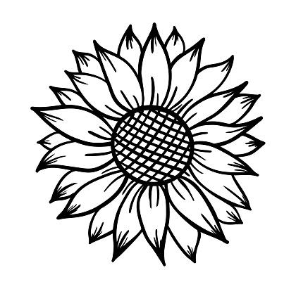 Sunflower print vector illustration for chirt