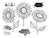 ひまわりの種子や花のベクトル描画を設定します。手には、孤立した図が描かれました。食品成分のスケッチ。