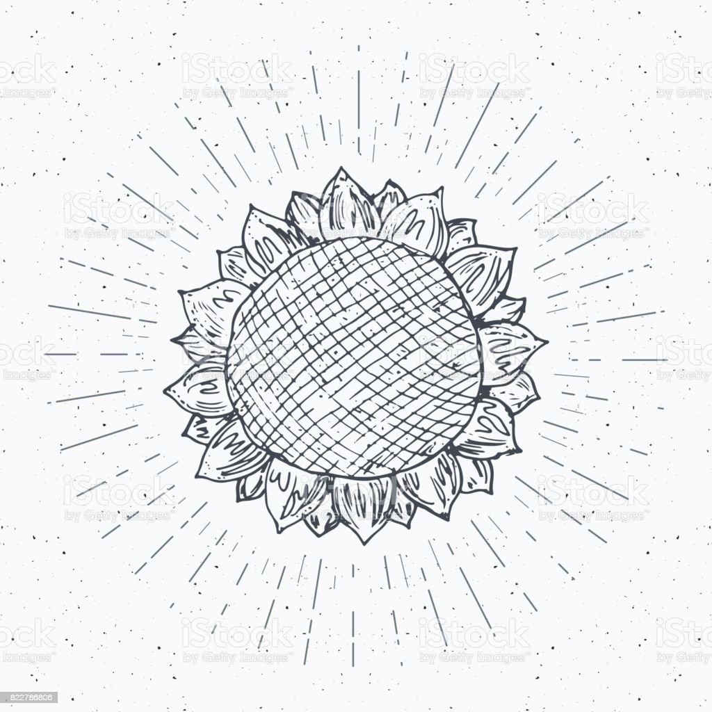 Sunflower Sketch Vintage Label Hand Drawn Grunge Textured
