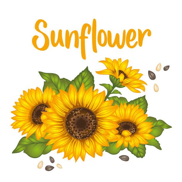 sunflower. sunflower card design. vector illustration - sunflower stock illustrations