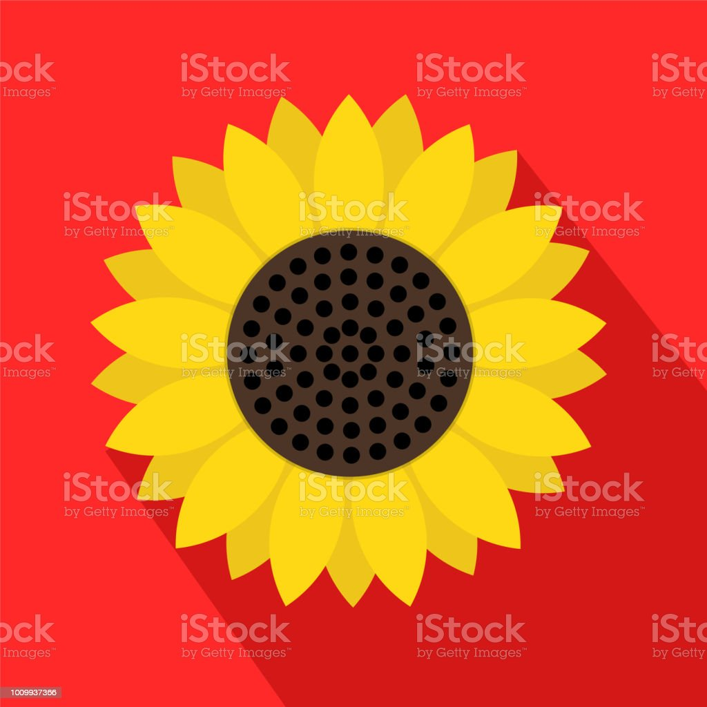 Sunflower Symbol Icon On Red With Long Shadow Stock Vector