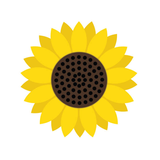 sunflower symbol icon, stock vector illustration - sunflower stock illustrations